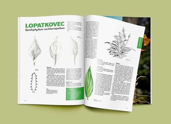Ilustrace přírodniny v knize