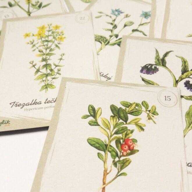 Detail dárkových kartiček s ilustracemi bylin