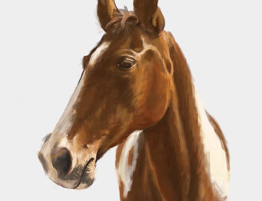 Detail hlavy koně